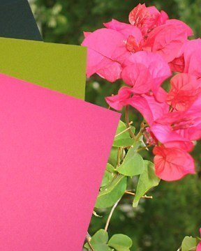 A Tropical Flower Wedding Color Pallette